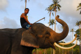 Mahout with his posing elephant, Namuang, Koh Samui