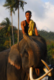 Mahout and elephant, Namuang, Koh Samui