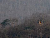A golden Buddha stands out among the dry trees on a hillside