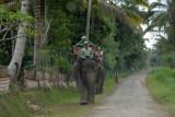 Elephant trekking, Bali