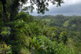 Lush landscape of the Ayung River valley, Bali