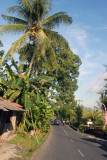 Palm lined road, central Bali