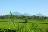 The northern volcanoes of Gunung Batukaru (2276m), Gunung Sengayang (2093m) and Gunung Adeng (1826 m) (1860m)