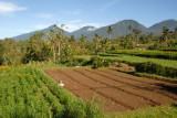 Freshly tilled fields along the road to Danau Beratan