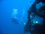 You can dive the Liberty with a local operator or as part of a day trip from south Bali