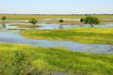 Wetlands along the Bani River near Djenné