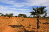 A dirt road leading to a Dogon village