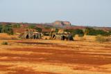 Nomad huts off the Bandiagara-Mopti Road