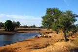 Waterhole along the Bandiagara-Mopti road