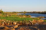 Fields and pond, Daga