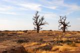 The Two Baobabs make great landmarks for hiking around Daga