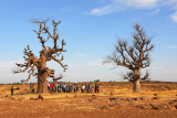 Pause for a nature talk at the Two Baobabs