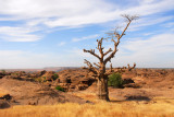 Baobab on the top of the Dogon Plateau, Mali
