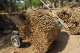 Millet, the staple food crop of West Africa