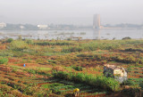 Subsistance farm plots on the south shore of the Niger River in sight of the BCEAO Tower, Bamako