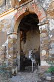 Donkey, Fort de Médine, Mali