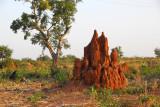 Termite mound, Niger