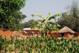 Crops growing in the village