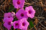 Pretty flowers, Benin