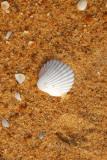 Seashell, Grand Popo, Benin