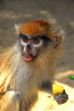 Baby monkey eating my lunch