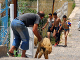 Man chasing a sheep while local boys return from swimming