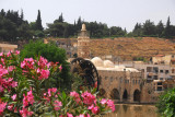 Flowering bush and the Mosque Al-Nouri with its waterwheel, Hama