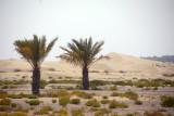 Desert near Bab Al Shams