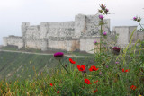 Krak des Chevaliers with wildflowers