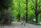 Tokyo - Yoyogi Park & Meiji Shrine