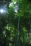 Bamboo grove, Kodai-ji Temple, Kyoto