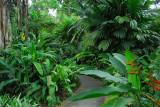 Lush vegetation, Singapore Zoo