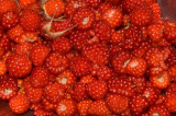 Wild Wineberries DSC_9636.jpg