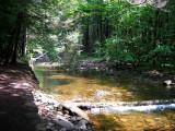 Kitchen Creek - Trailside
