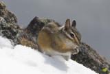 Lil Evander w Snow