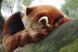 Zoo - Sleepy
