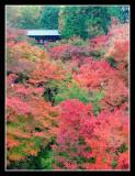 Tofukuji, Kyoto