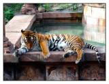 Maharajah Jungle Trek, Animal Kingdom, Orlando