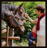 Horse feeling