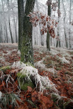the first frost in the wood