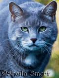 Teddie - a big cat!