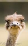 Ostrich at f/4