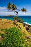 Palm at Fingal Head