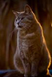 Dougal at sunrise