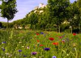 Chateau Gaillard landscape with wildflowers