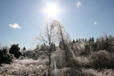 Icy Trees and Sun 2