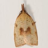 3706 - Mosaic Sparganothis Moth - Sparganothis xanthoides