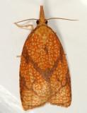3720 - Reticulated Sparganothis - Sparganothis reticulatana