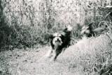 Doggie Style