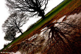 Tree, Field and Puddle
